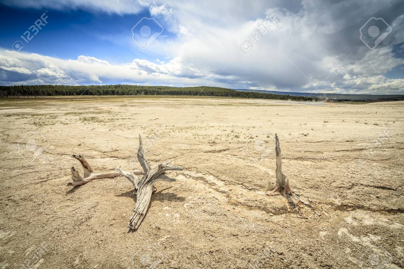 85833603-barren-land-with-dry-trees-in-yellowstone-national-park-usa.jpg