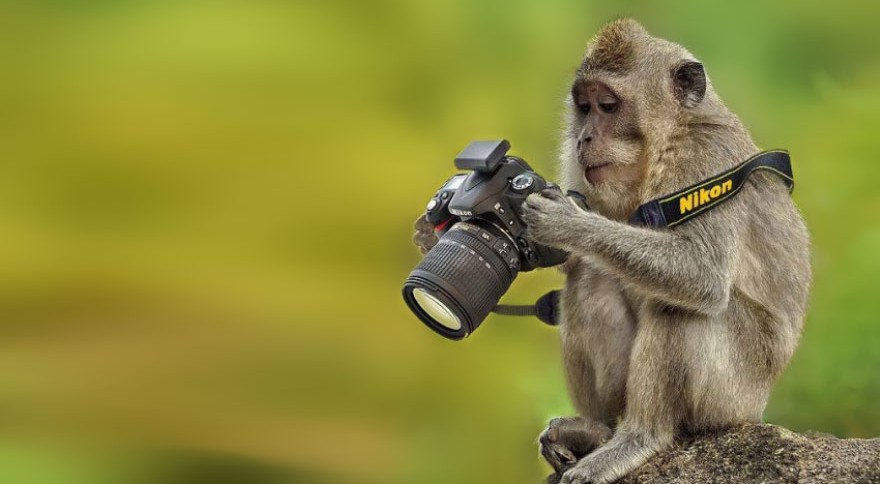 animals_with_camera_photos_08-e1440862987941.jpg