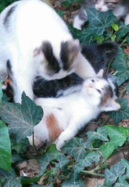 cat tragedy.jpg
