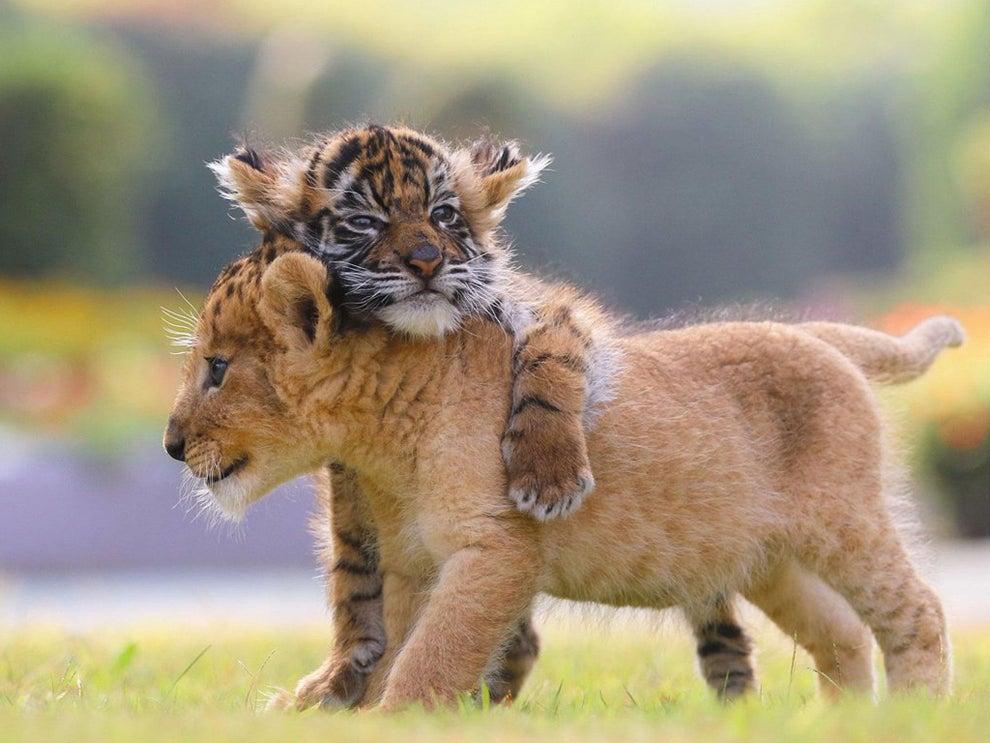 cubs9.jpg