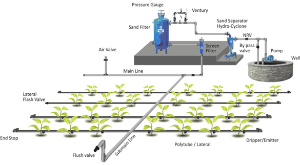 drip-irrigation%20(1)[1].jpg
