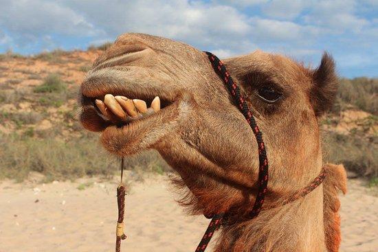 each-camel-with-their.jpg