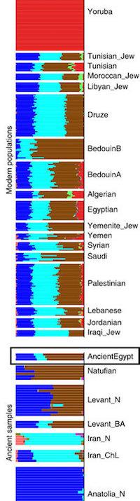 egyptbar.jpg