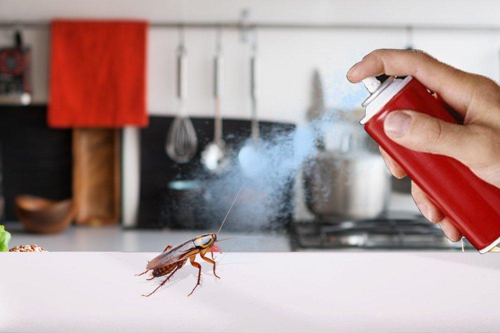 Killing-cockroach-by-poison-spray.jpg