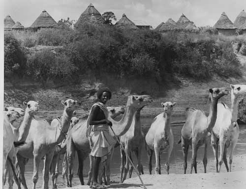 nomad-with-camels.jpg